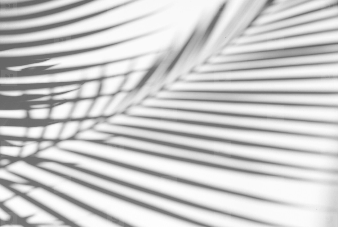 Photos Tropical Leaves Shadow Overlay 209294 Youworkforthem Posted in photoshop » actions, pattern & styles. tropical leaves shadow overlay