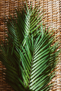 Palm leaf on a rattan background under sunlight