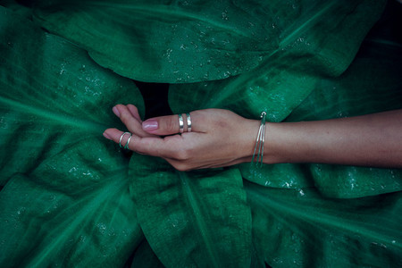 Woman hands on green leaves