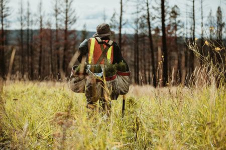 Ranger working in forest for sustainable afforestation