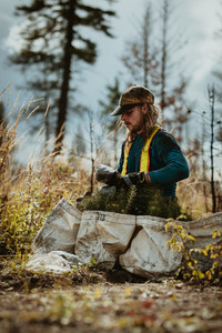 Forest worker with pine seedling for reforestation