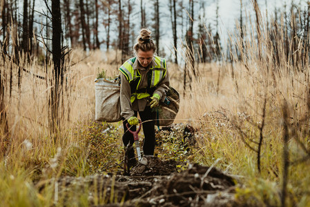 Female forester planting seedlings