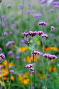 Close up of summer green meadow with flowers