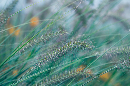 Macro photography of grass on a