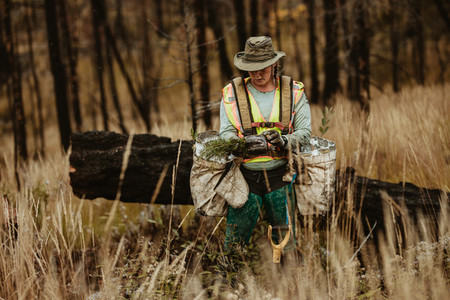 Woman planting new saplings in forest