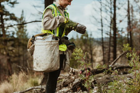 Female forester with saplings