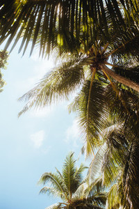 Scenic view of tall coconut trees on an island