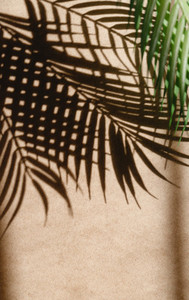 Tropics minimalist abstract blurred background of palm leaf shadow over kraft paper
