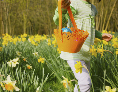 Girl with basket enjoying Easter egg hunt in sunny daffodil field