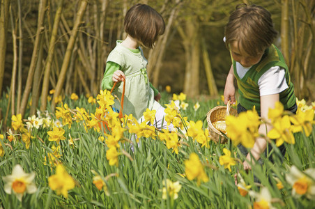 Brother and sister enjoying Easter egg hunt in sunny daffodil field