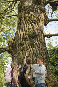 Curious girls looking up at tree in woods on field trip