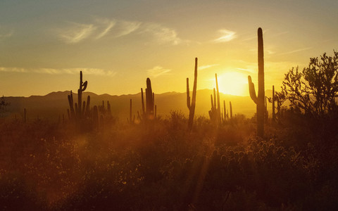 Sun setting behind silhouetted cacti in desert