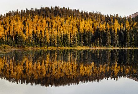 Golden trees and Reflection Lake