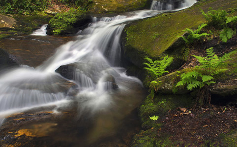 Base of tranquil waterfall in woods