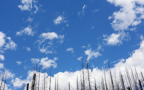 Burnt forest fire treetops against blue sky with clouds