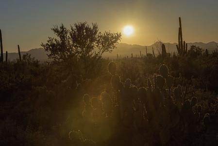 Sunset over tranquil Sonoran Desert