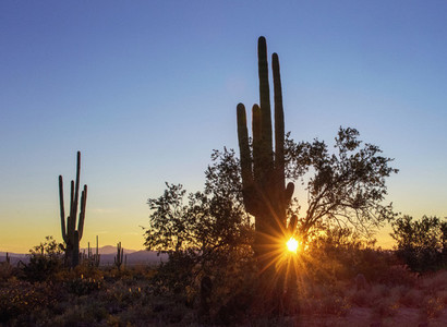 Tranquil sunset shining behind cactus