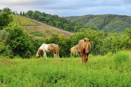 Horses grazing along idyllic green rolling hills