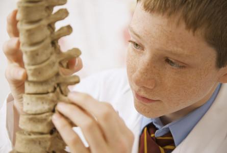 Curious junior high school boy student examining spine model