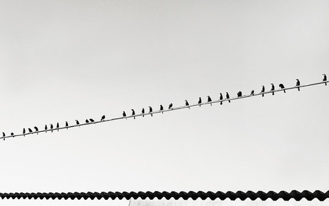Birds perched on telephone wire