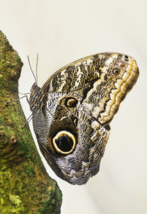 Extreme close up butterfly on tree trunk
