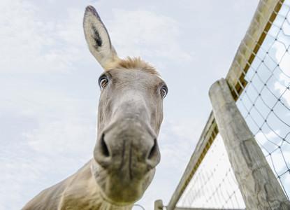 Portrait cute donkey with ear back