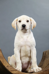 Portrait cute puppy on wooden stool