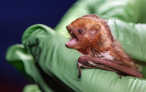 Close up bat being held by hands in green gloves