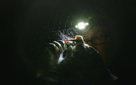 Scientist pulling bat from net at night