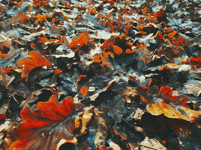Close up orange and brown autumn leaves on ground