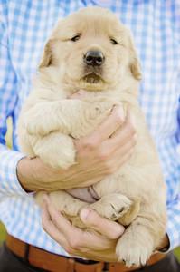 Close up man holding Golden Retriever puppy