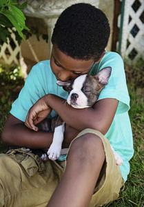 Boy cuddling sleeping Boston Terrier puppy