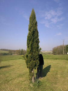 Woman hiding behind tree in sunny field