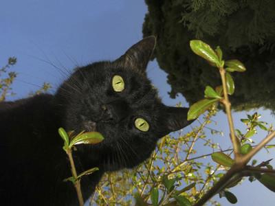 Portrait curious black cat from below