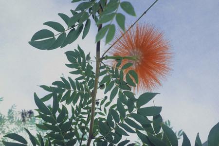 Orange flower blooming on green plant