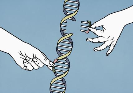Hands dismantling double helix
