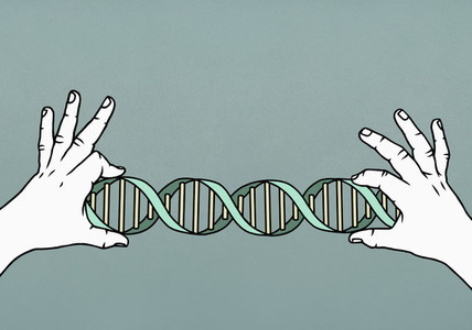 Hands holding double helix