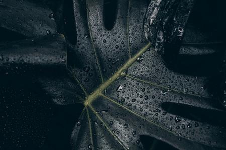Dark tropical leaf with raindrop