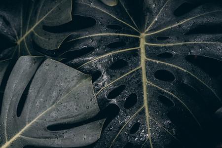 dark tropical leaf with raindrops