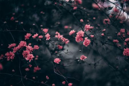 Red Flowers in Tilt Shift Lens