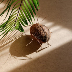 Summer abstract creative composition with a coconut and palm leaf against kraft paper