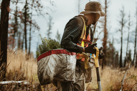 Forester working in deforested area of the forest
