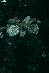 Moody macro nature photography  Green foliage after rain in a dark forest