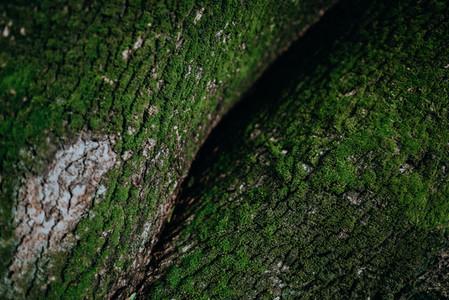 Natural Textures 2