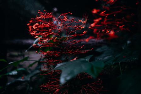 Natural Image Textures 4