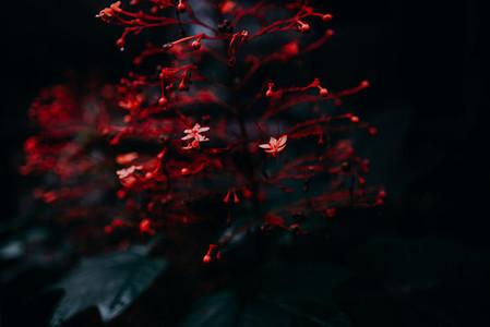 Natural Image Textures 7