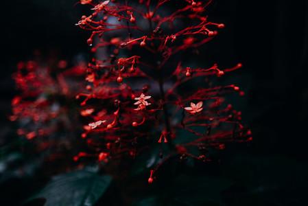 Natural Image Textures 8