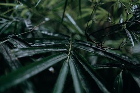 Natural Image Textures 21
