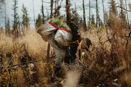 Forester in the forest working on sustainable afforestation