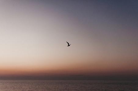 Summer Morning Seagull